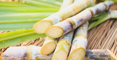 Farmers urged to farm quality sugarcane