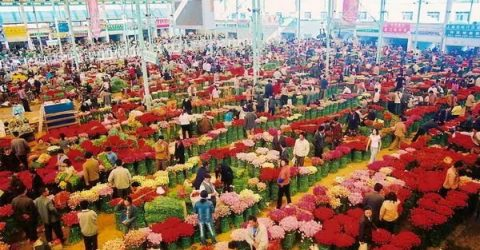 Kunming: The city of flowers