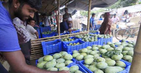 Mango trading now on final stage in Rajshahi, Chapainawabgonj