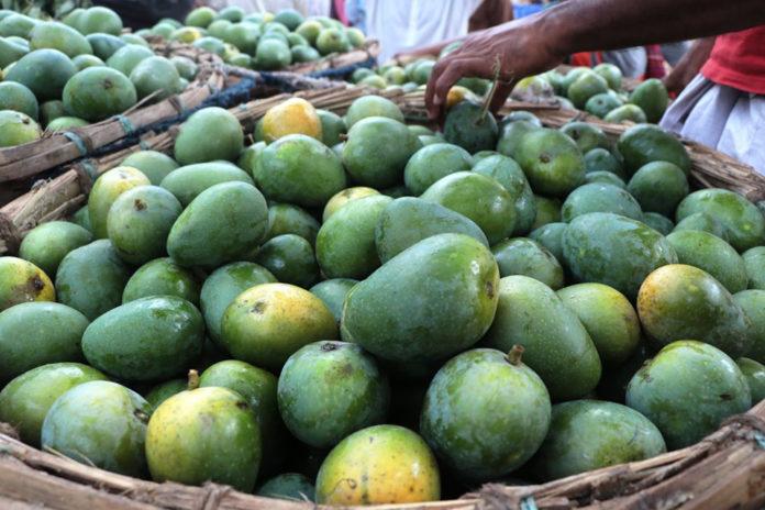 PRAN to procure 60,000 metric tons of mangoes