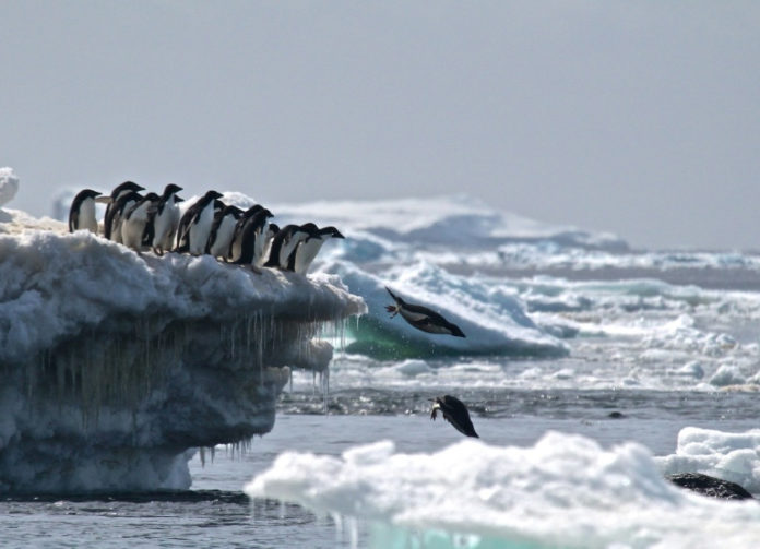 Antarctic sea ice in dizzying decline since 2014: study
