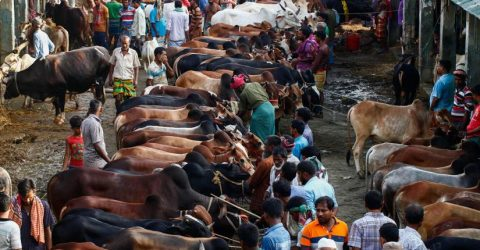 24 cattle markets to begin in capital tomorrow
