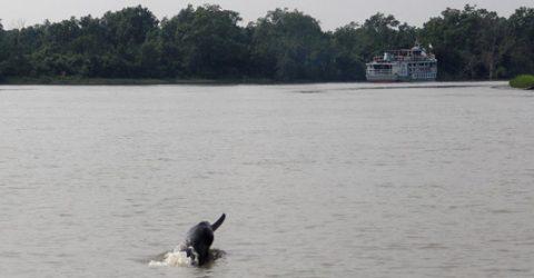 Livelihood grants help fishers conserve Sundarbans dolphins