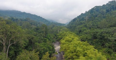 Gabon juggles competing demands in fight to protect nature