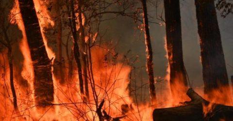 Australian man accused of starting bushfire to protect cannabis crop