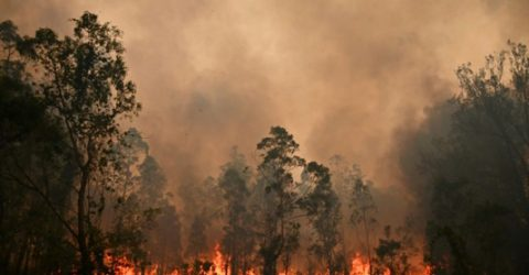 Greater Sydney faces 'catastrophic' bushfire threat