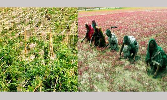 Rangpur region to produce record 9-lakh tonnes winter vegetables