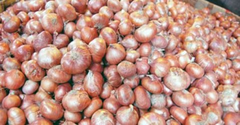 Over 9.67-lakh tonnes onion yield expected in Rajshahi division
