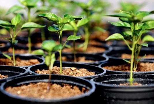 One crore saplings to be planted marking 'Mujib Year'