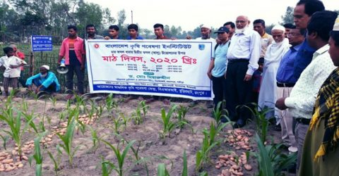 Quadruple cropping patterns more profitable: agriculturists