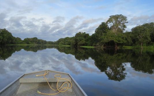 Brazilian Amazon deforestation hits new record in May