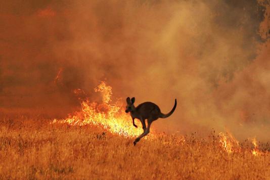 Estimated 3 billion animals affected by Australia bushfires: study