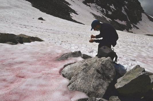 Pink ice in Italy's Alps sparks algae probe