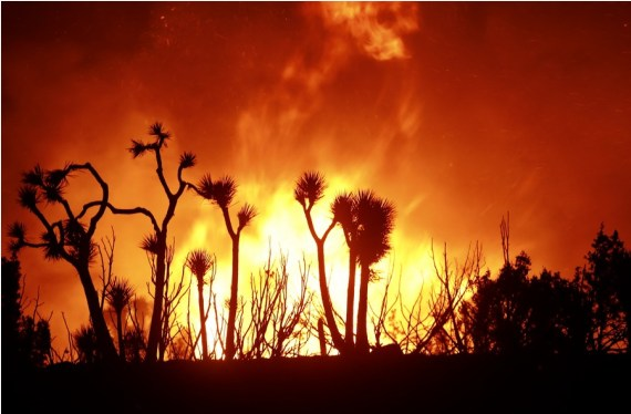 Wildfires in US California burn over 4 mln acres of land