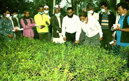 Scientific farming methods stressed for boosting tea production