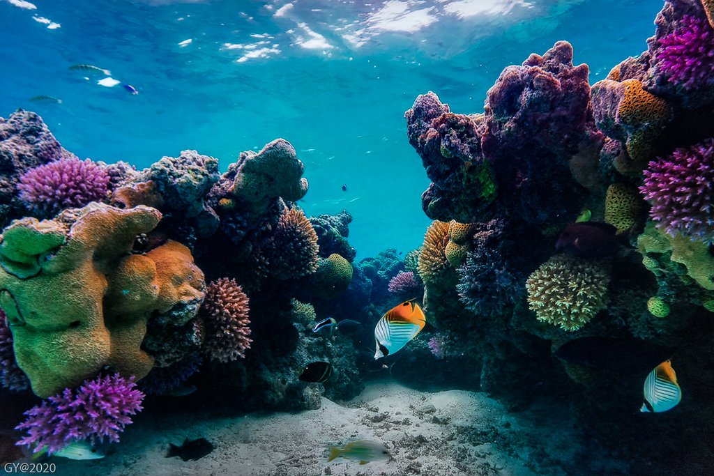 New coral found in Great Barrier Reef