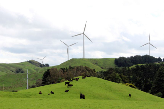 Electric cars, fewer cows in New Zealand's climate change plan