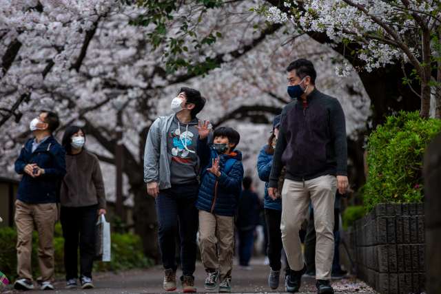 Japan sees earliest cherry blossoms on record as climate warms