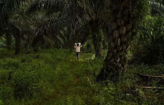 Rich nation appetites driving tropical deforestation