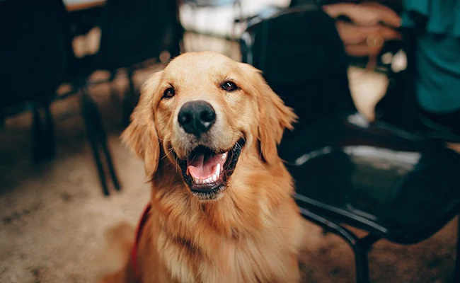 Bad dog? Research suggests superbug link to man's best friend