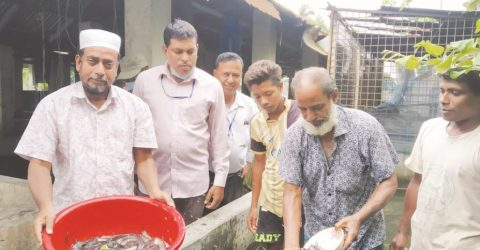Huge potential for saltwater Tangra fry production in Jashore hatcheries