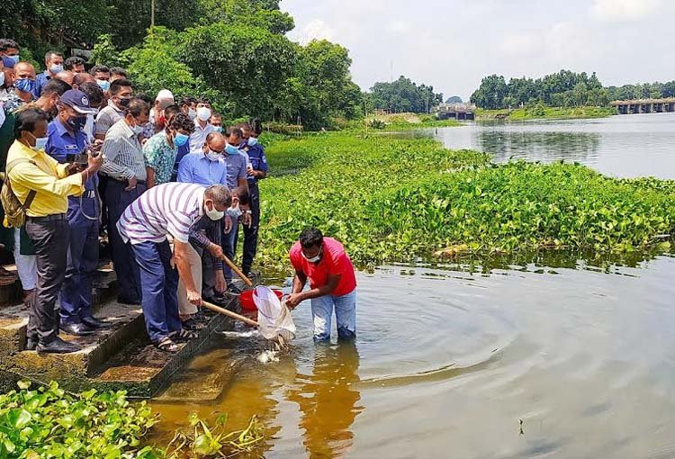 404 kgs of fish fries released in Nabaganga river